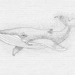 Behangwand Walvis Wit, behangen, behang, behangwand, wand behangen, kwaliteit, walvis, natuur, puur, stijlvol,behang, behangen, wand, kunst, art,
